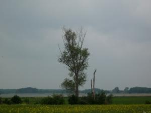 Die Einsamkeit der Bäume