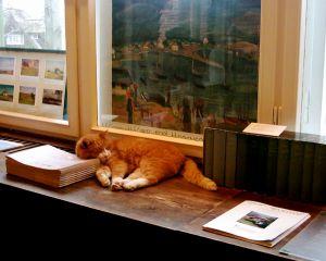 Falkes Katze, hier bei einem Besuch im Gerhart-Hauptmann-Haus zu Kloster auf Hiddensee