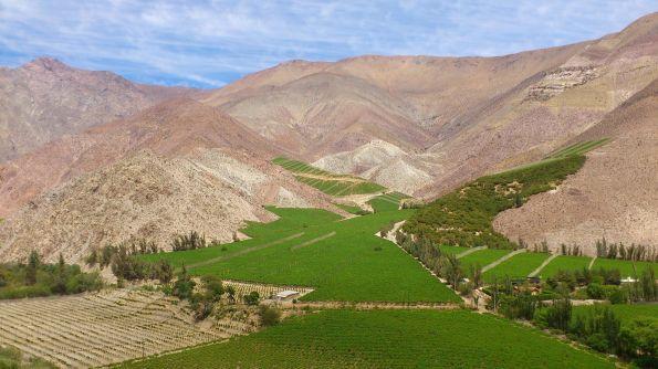 Grüner wird's nicht. Valle de Elqui, das Tal, in dem die Pisco-Traube reift