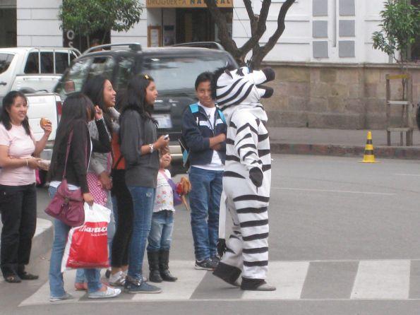 Das Zebra regelt den Verkehr – wer sonst