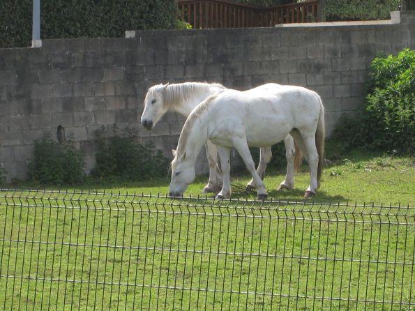 Diese Pferde sind müde, aber außer Gefahr © Julia Thalheim