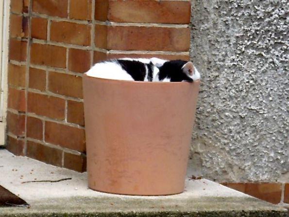 Katzen sind nicht immer ansprechbar