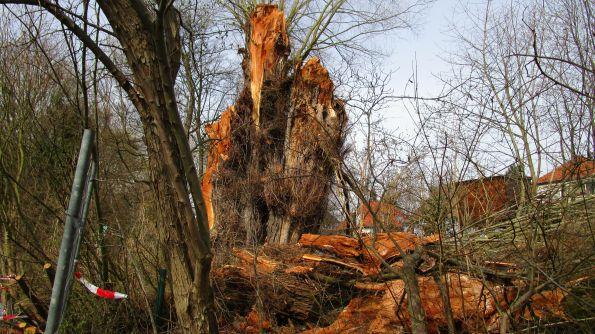 Am Ende sieht man erst, wie gewaltig der Baum war