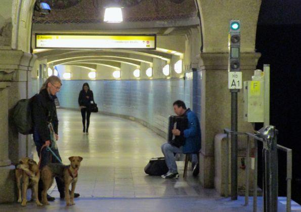 Nicht alle Hunde lieben die Musik © Fritz-Jochen Kopka