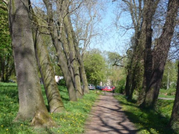 Die Allee mit diesen schrägen Bäumen habe ich nie gesehen. Man war eben jung. © Fritz-Jochen Kopka