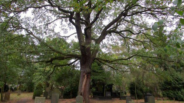 Unter solchen Bäumen ist Ruhe © Fritz-Jochen Kopka