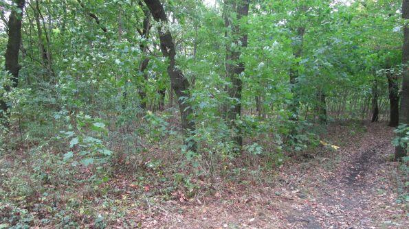 Wieder frei, jubeln die Bäume, Blätter und Gräser. Wehret den Anfängen. Das wird hier keine wilde Kippe.